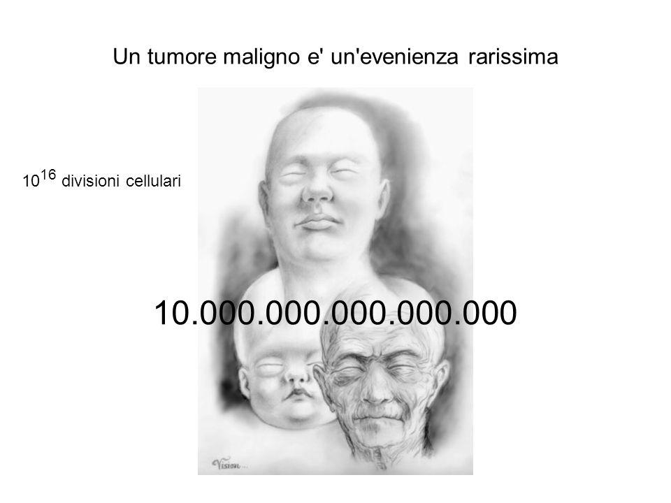 Un tumore maligno e' un'evenienza rarissima 10 16 divisioni cellulari 10.000.000.000.000.000