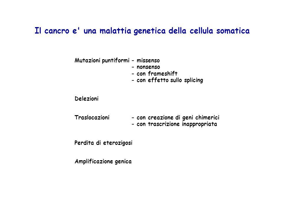 Silenziamento per metilazione del DNA Il cancro e una malattia (epi)genetica della cellula somatica Mutazioni puntiformi- missenso - nonsenso - con frameshift - con effetto sullo splicing Traslocazioni- con creazione di geni chimerici - con trascrizione inappropriata Perdita di eterozigosi Delezioni Amplificazione genica