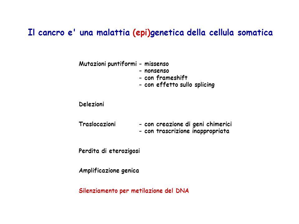 Silenziamento per metilazione del DNA Il cancro e' una malattia (epi)genetica della cellula somatica Mutazioni puntiformi- missenso - nonsenso - con f