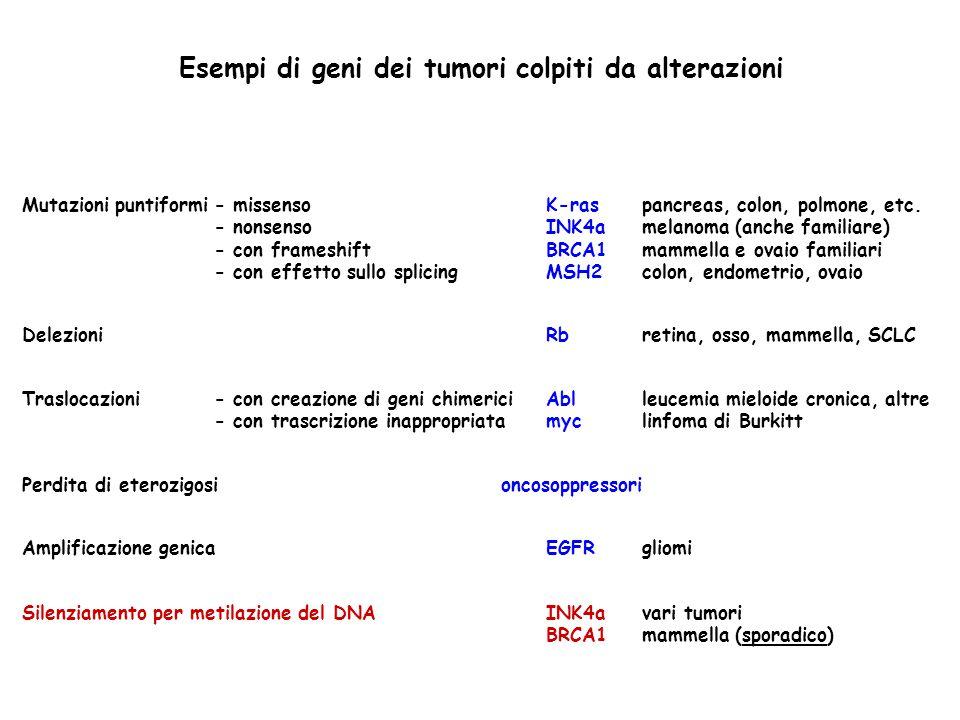Esempi di geni dei tumori colpiti da alterazioni Silenziamento per metilazione del DNA Mutazioni puntiformi- missenso - nonsenso - con frameshift - co