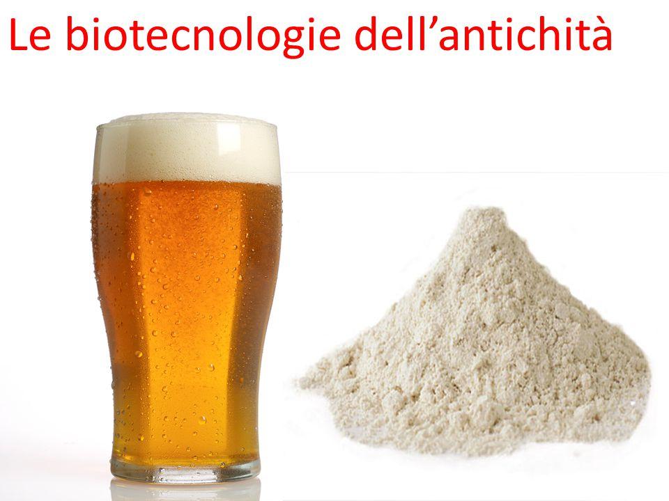 Le biotecnologie dell'antichità