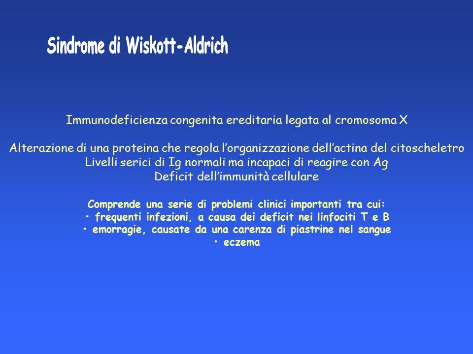 Immunodeficienza congenita ereditaria legata al cromosoma X Alterazione di una proteina che regola l'organizzazione dell'actina del citoscheletro Live