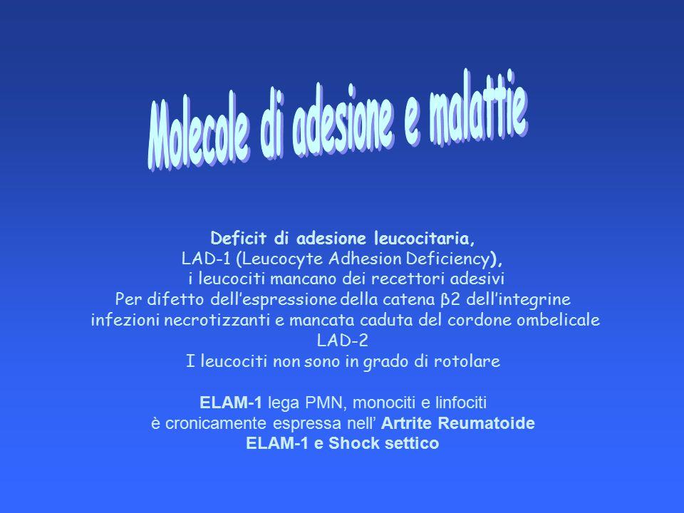 Deficit di adesione leucocitaria, LAD-1 (Leucocyte Adhesion Deficiency), i leucociti mancano dei recettori adesivi Per difetto dell'espressione della