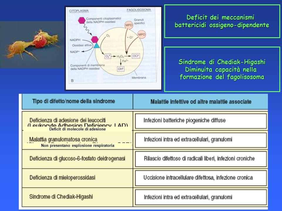 Deficit dei meccanismi battericidi ossigeno-dipendente Sindrome di Chediak-Higashi Diminuita capacità nella formazione del fagolisosoma Non presentano