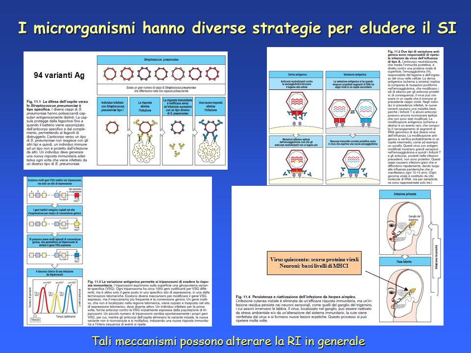 I microrganismi hanno diverse strategie per eludere il SI 94 varianti Ag Virus quiescente: scarse proteine virali Neuroni: bassi livelli di MHCI Tali