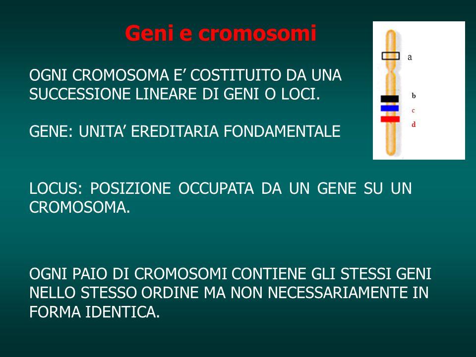 OGNI CROMOSOMA E' COSTITUITO DA UNA SUCCESSIONE LINEARE DI GENI O LOCI. GENE: UNITA' EREDITARIA FONDAMENTALE LOCUS: POSIZIONE OCCUPATA DA UN GENE SU U