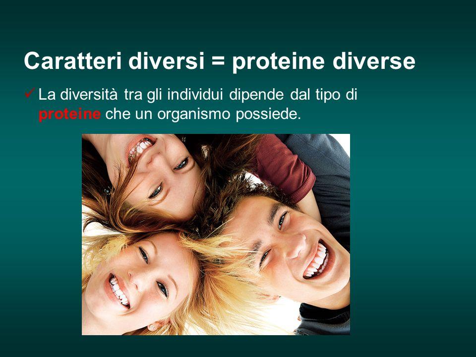 Caratteri diversi = proteine diverse La diversità tra gli individui dipende dal tipo di proteine che un organismo possiede.