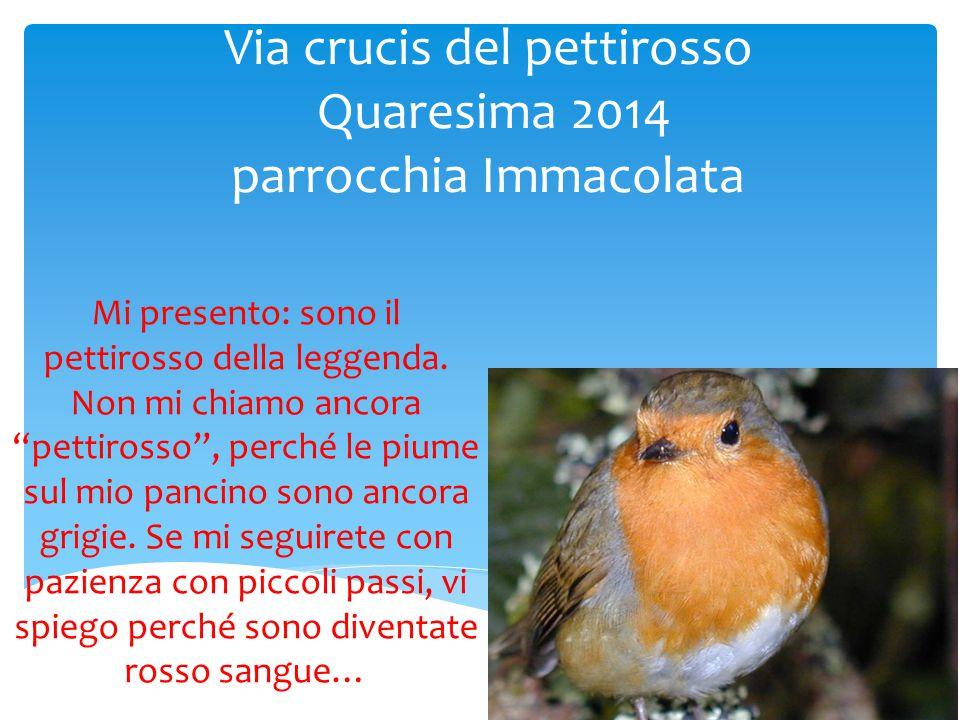 """Via crucis del pettirosso Quaresima 2014 parrocchia Immacolata Mi presento: sono il pettirosso della leggenda. Non mi chiamo ancora """"pettirosso"""", perc"""