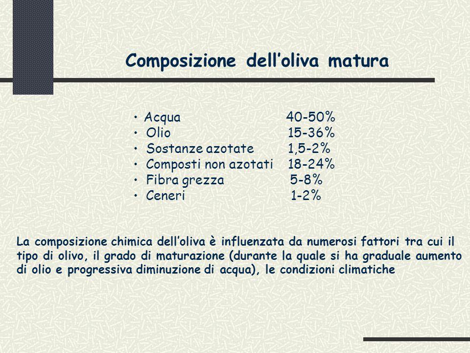 COMPOSIZIONE ACIDICA OLIO DI OLIVA L'ACIDO OLEICO E IL LINOLEICO SONO ESTERIFICATI IN POSIZIONE 2 DEL GLICEROLO, QUESTO PERMETTE DI DISTINGUERE UN GRASSO SINTETICO DA UNO NATURALE; AI FINI DIGESTIVI, L'IDROLISI DELLA LIPASI PANCREATICA, FORMA 2-MONOGLICERIDI FACILMENTE ASSORBIBILI E ASSIMILABILI.