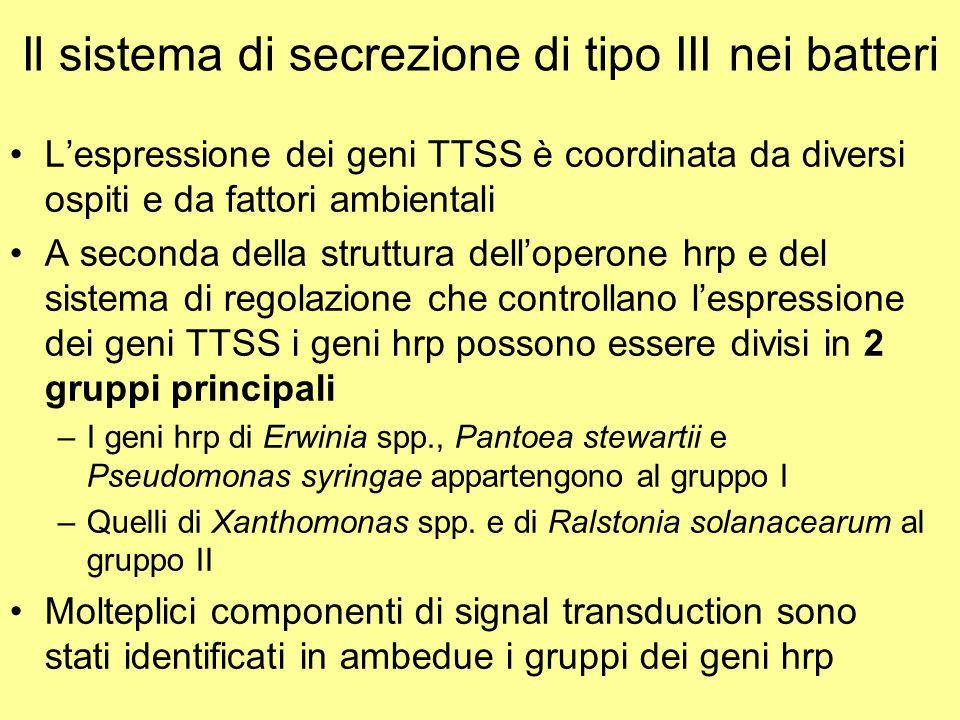 Il sistema di secrezione di tipo III nei batteri L'espressione dei geni TTSS è coordinata da diversi ospiti e da fattori ambientali A seconda della st
