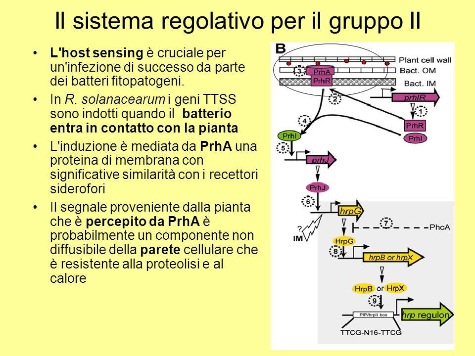 Il sistema regolativo per il gruppo II L'host sensing è cruciale per un'infezione di successo da parte dei batteri fitopatogeni. In R. solanacearum i