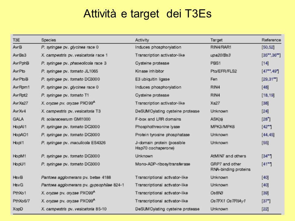 Attività e target dei T3Es