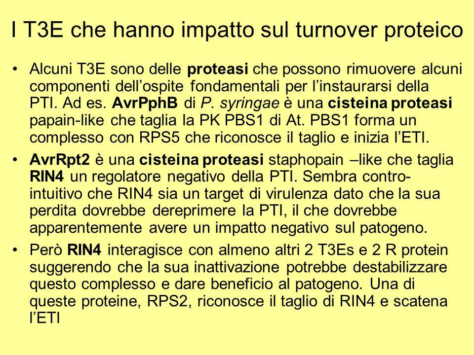 I T3E che hanno impatto sul turnover proteico Alcuni T3E sono delle proteasi che possono rimuovere alcuni componenti dell'ospite fondamentali per l'in