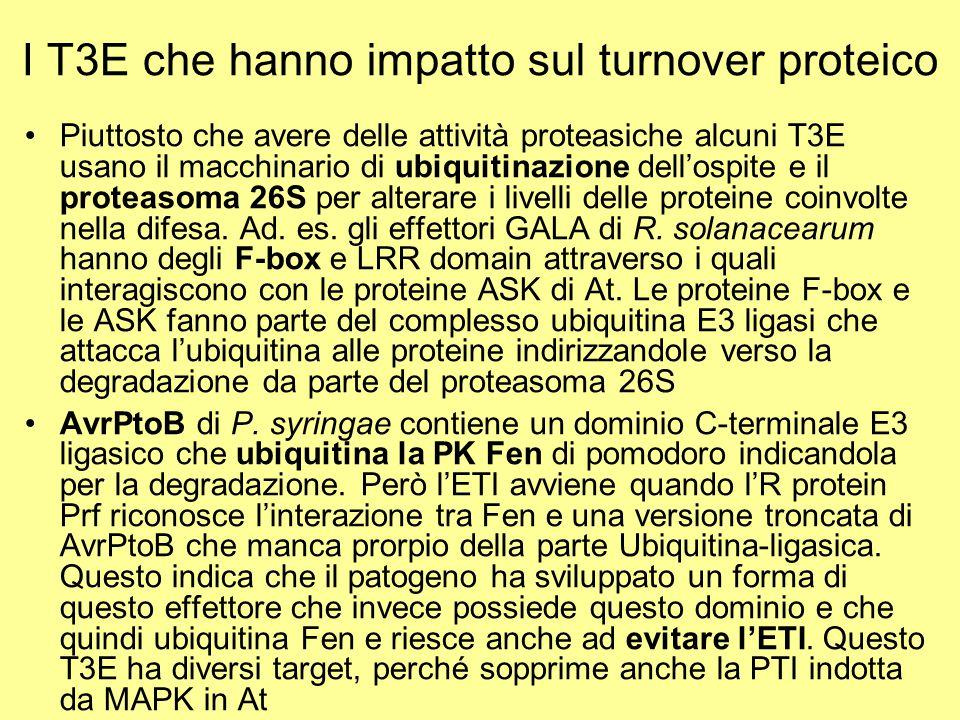 I T3E che hanno impatto sul turnover proteico Piuttosto che avere delle attività proteasiche alcuni T3E usano il macchinario di ubiquitinazione dell'o