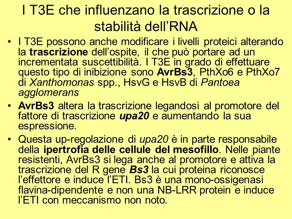 I T3E che influenzano la trascrizione o la stabilità dell'RNA I T3E possono anche modificare i livelli proteici alterando la trascrizione dell'ospite,
