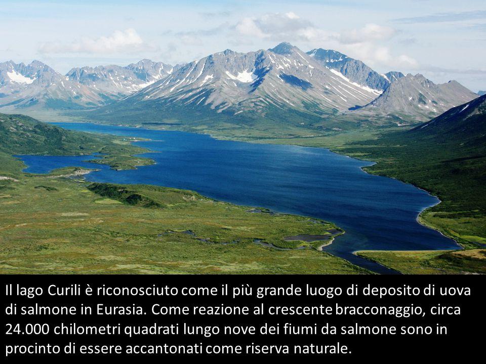 Il lago Curili è riconosciuto come il più grande luogo di deposito di uova di salmone in Eurasia.