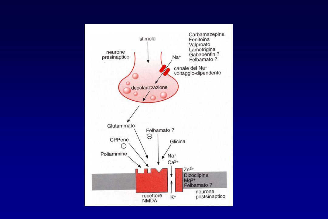 Meccanismo d'azione riduce le correnti del calcio a bassa soglia (correnti T) nei neuroni talamici Effetti indesiderati disturbi gastrointestinali e sul SNC Uso clinico assenze semplici tipo Piccolo Male dosaggio: 500-1500 mg/die livelli ematici terapeutici: 40-80  g/ml ETOSUCCIMIDE