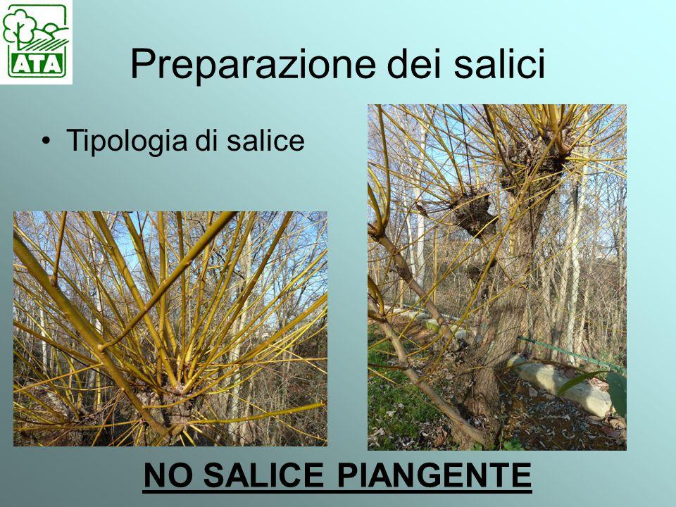 Preparazione dei salici Tipologia di salice NO SALICE PIANGENTE