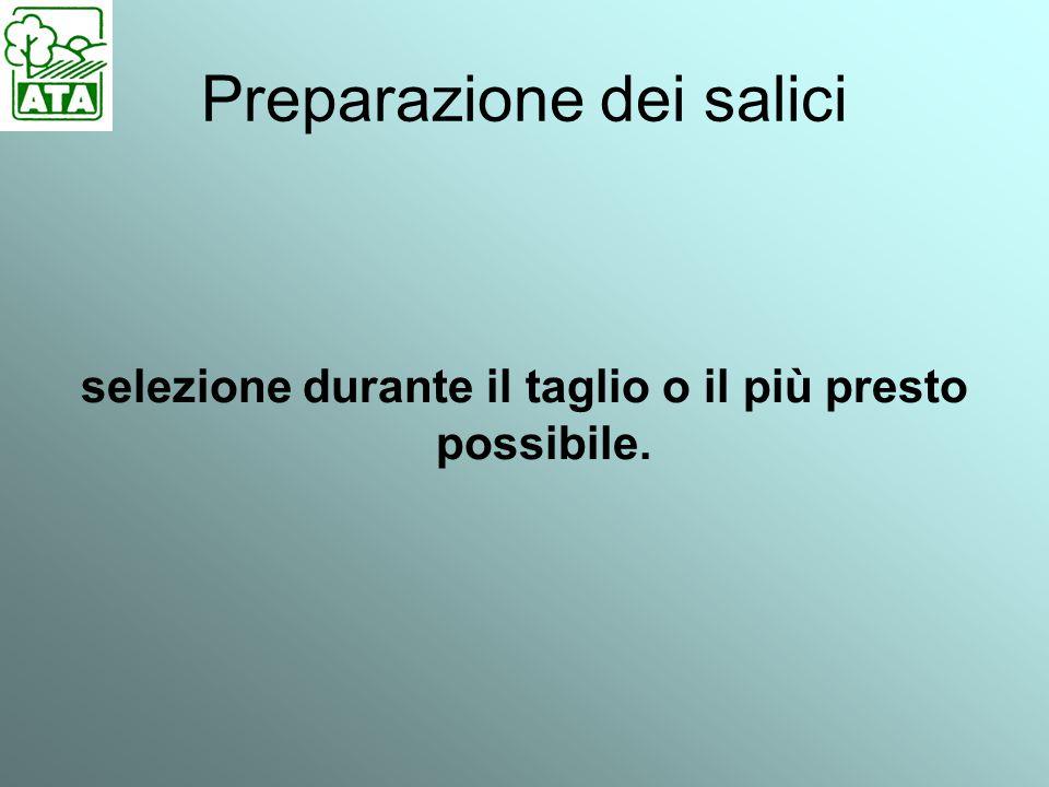 Preparazione dei salici selezione durante il taglio o il più presto possibile.