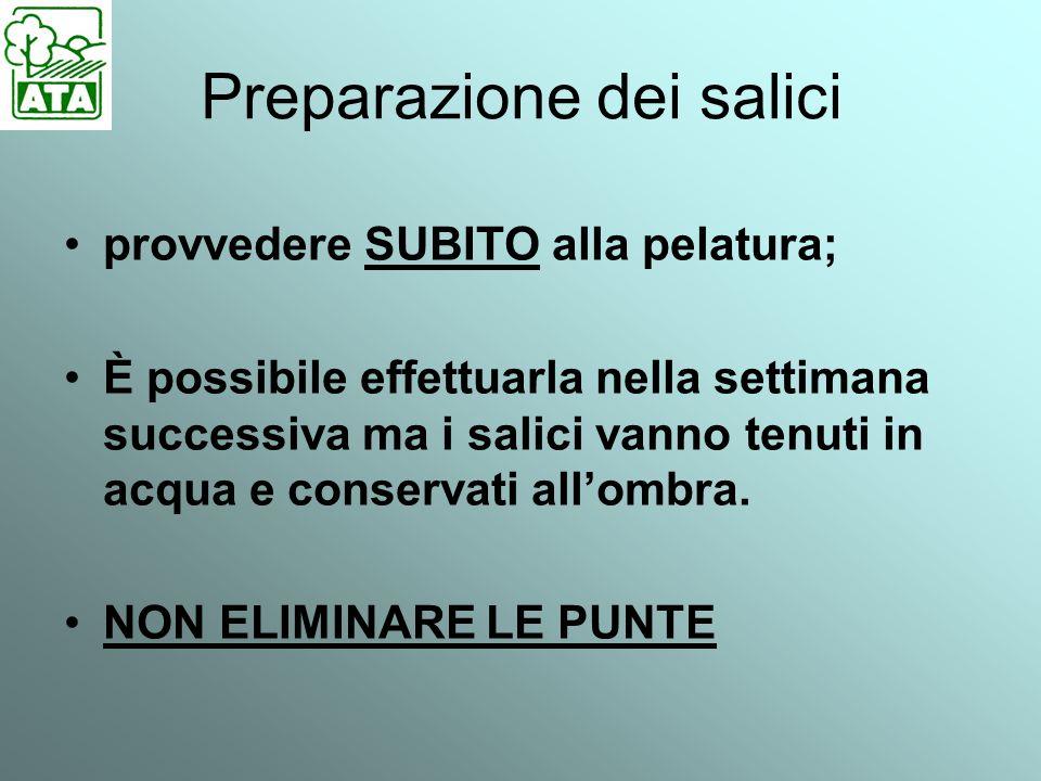 Preparazione dei salici provvedere SUBITO alla pelatura; È possibile effettuarla nella settimana successiva ma i salici vanno tenuti in acqua e conservati all'ombra.
