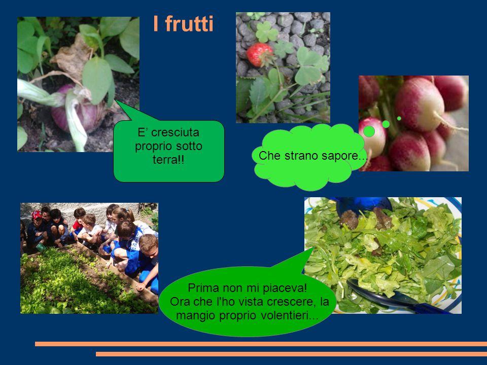 I frutti E' cresciuta proprio sotto terra!! Che strano sapore... Prima non mi piaceva! Ora che l'ho vista crescere, la mangio proprio volentieri...