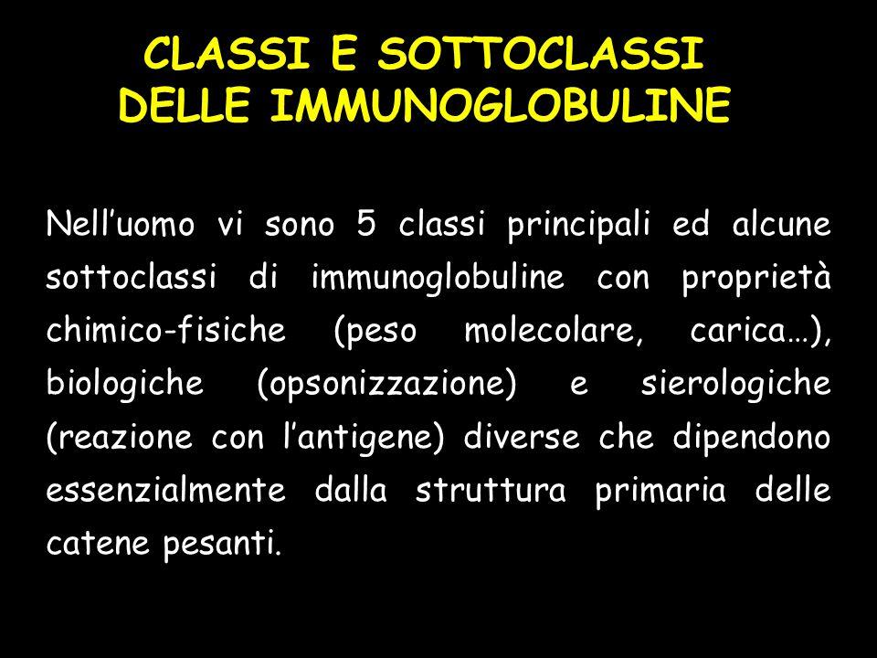 CLASSI E SOTTOCLASSI DELLE IMMUNOGLOBULINE Nell'uomo vi sono 5 classi principali ed alcune sottoclassi di immunoglobuline con proprietà chimico-fisich