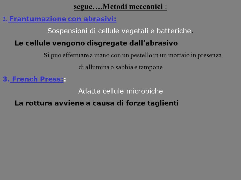 segue….Metodi meccanici : 2. Frantumazione con abrasivi: Sospensioni di cellule vegetali e batteriche. Le cellule vengono disgregate dall'abrasivo Si