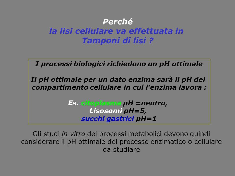 Perché la lisi cellulare va effettuata in Tamponi di lisi ? I processi biologici richiedono un pH ottimale Il pH ottimale per un dato enzima sarà il p