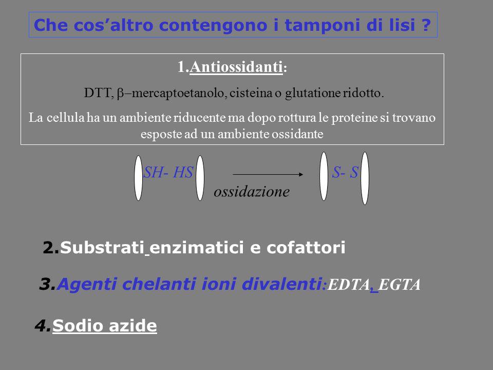 2.Substrati enzimatici e cofattori 3.Agenti chelanti ioni divalenti :EDTA, EGTA 4.Sodio azide 1.Antiossidanti : DTT,  mercaptoetanolo, cisteina o g