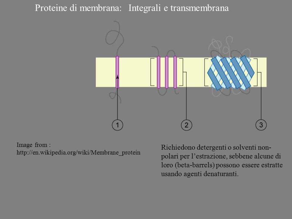 Proteine di membrana:Integrali e transmembrana Richiedono detergenti o solventi non- polari per l'estrazione, sebbene alcune di loro (beta-barrels) po