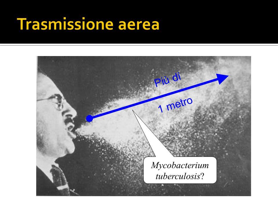 Più di 1 metro Mycobacterium tuberculosis?