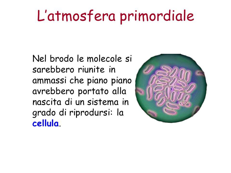 L'atmosfera primordiale Nel brodo le molecole si sarebbero riunite in ammassi che piano piano avrebbero portato alla nascita di un sistema in grado di