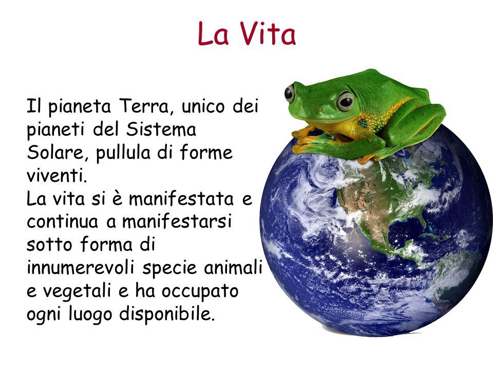 La Vita Il pianeta Terra, unico dei pianeti del Sistema Solare, pullula di forme viventi. La vita si è manifestata e continua a manifestarsi sotto for