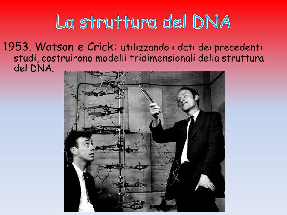  W. e C.: Il DNA ha una struttura a doppia elica .