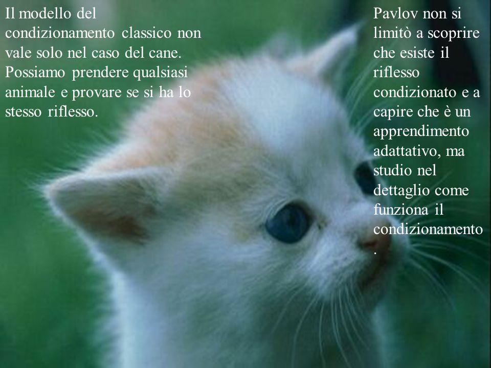 Il merito di pavlov fu di capire che in questi casi la produzione di saliva non è stimolata dal pensiero dell'animale, ma dello stesso stimolo esterno