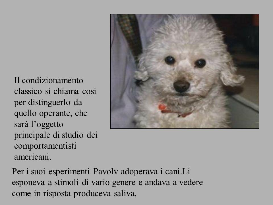 Per i suoi esperimenti Pavolv adoperava i cani.Li esponeva a stimoli di vario genere e andava a vedere come in risposta produceva saliva.