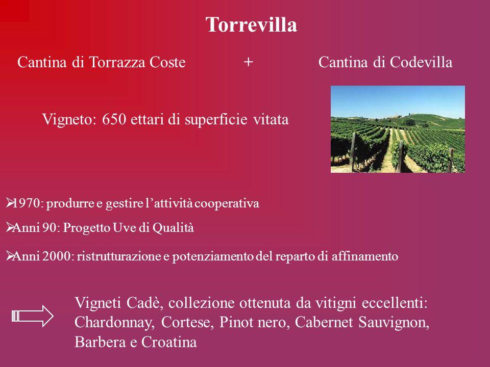 Torrevilla Cantina di Torrazza Coste + Cantina di Codevilla  1970: produrre e gestire l'attività cooperativa  Anni 90: Progetto Uve di Qualità  Ann