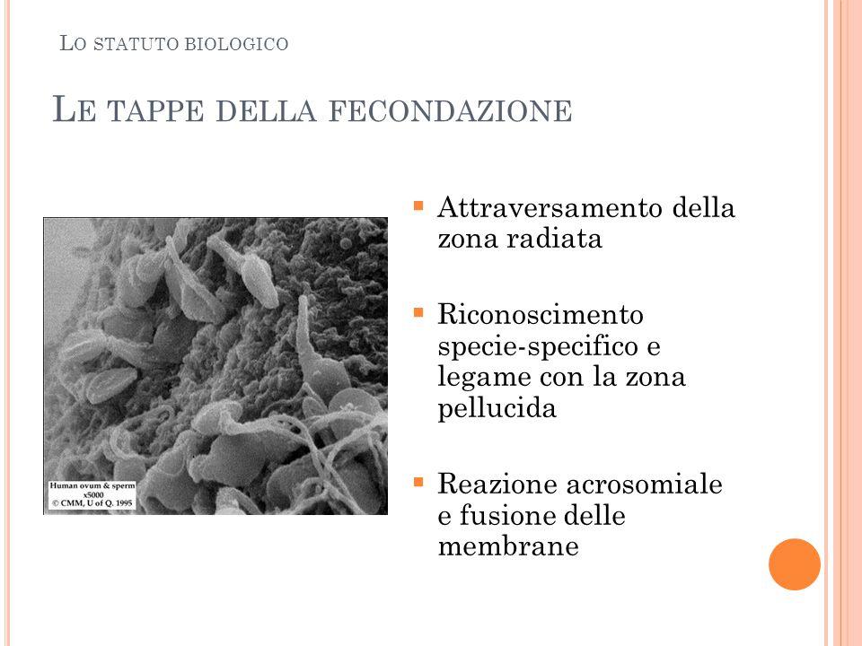 L E TAPPE DELLA FECONDAZIONE  Attraversamento della zona radiata  Riconoscimento specie-specifico e legame con la zona pellucida  Reazione acrosomi