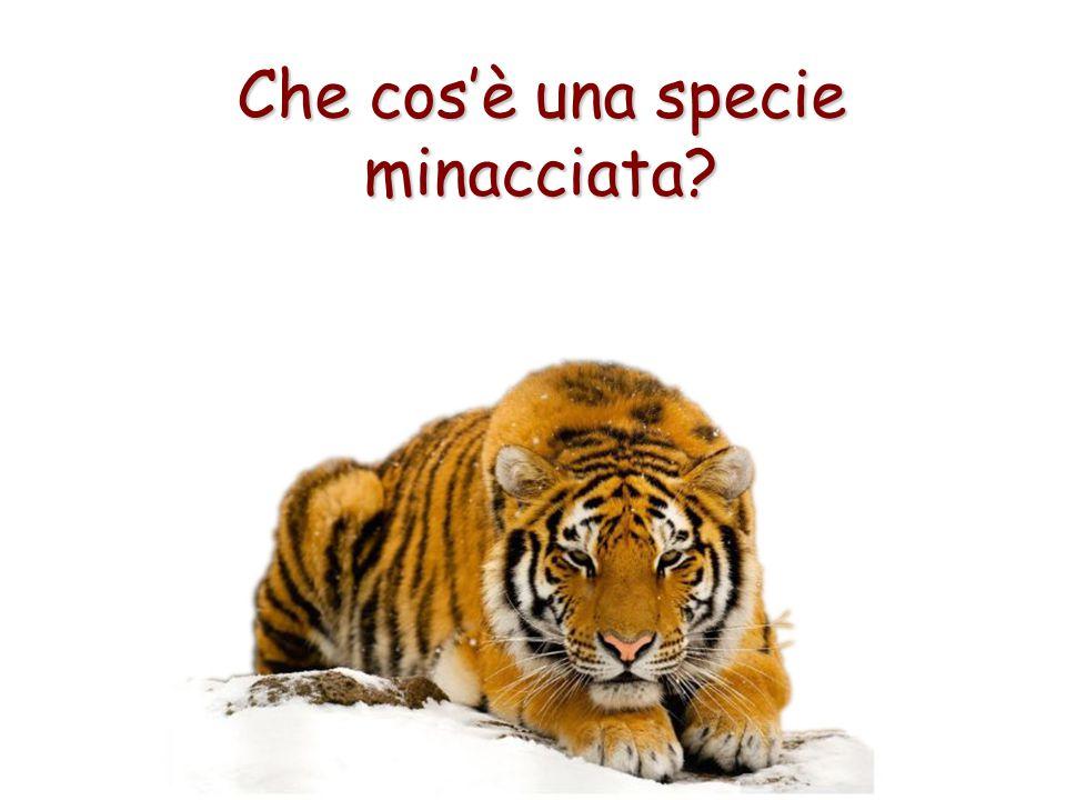 Che cos'è una specie minacciata?