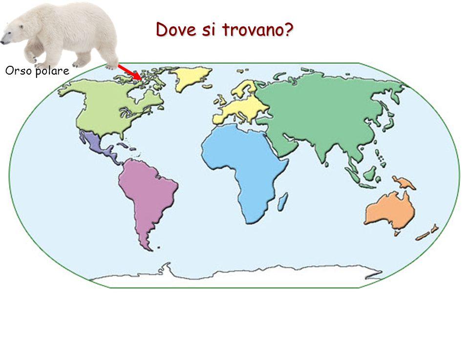 Dove si trovano? Orso polare