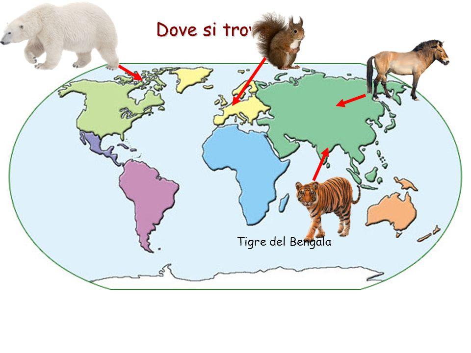 Dove si trovano? Tigre del Bengala