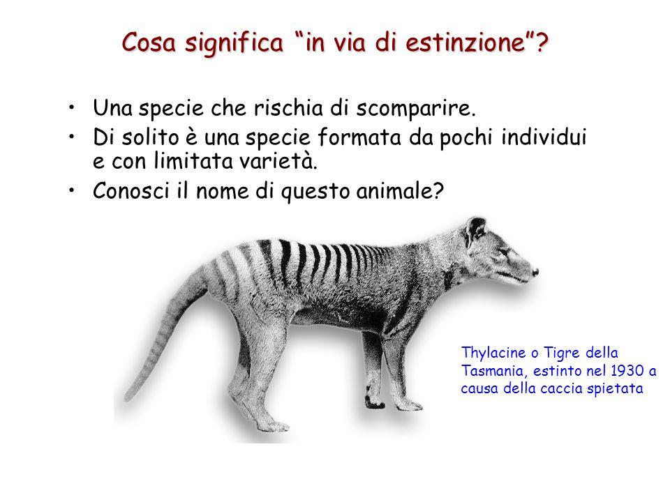 Una specie che rischia di scomparire. Di solito è una specie formata da pochi individui e con limitata varietà. Conosci il nome di questo animale? Cos