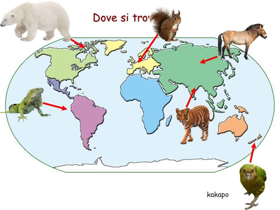 Dove si trovano? kakapo