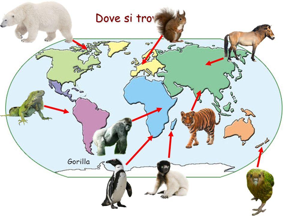 Dove si trovano? Gorilla