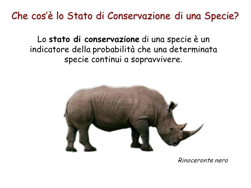 Che cos'è lo Stato di Conservazione di una Specie? Lo stato di conservazione di una specie è un indicatore della probabilità che una determinata speci