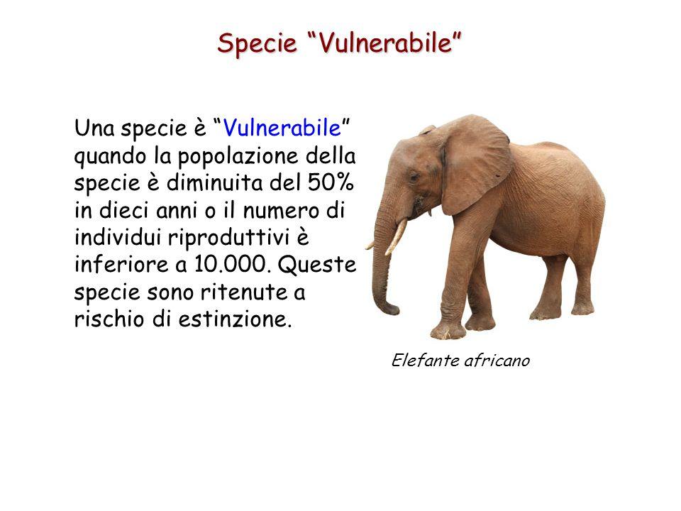 Specie Vulnerabile Una specie è Vulnerabile quando la popolazione della specie è diminuita del 50% in dieci anni o il numero di individui riproduttivi è inferiore a 10.000.