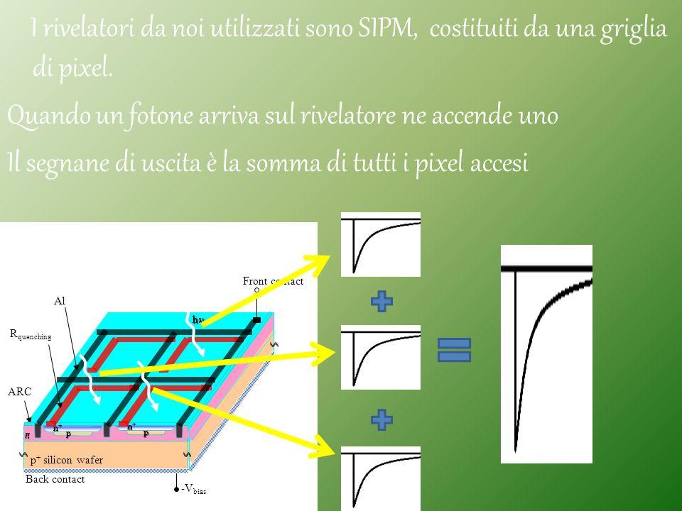 I rivelatori da noi utilizzati sono SIPM, costituiti da una griglia di pixel. Quando un fotone arriva sul rivelatore ne accende uno Il segnane di usci