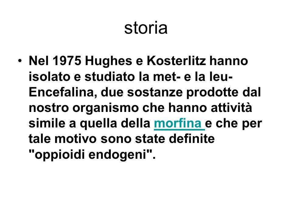 storia Nel 1975 Hughes e Kosterlitz hanno isolato e studiato la met- e la leu- Encefalina, due sostanze prodotte dal nostro organismo che hanno attività simile a quella della morfina e che per tale motivo sono state definite oppioidi endogeni .morfina