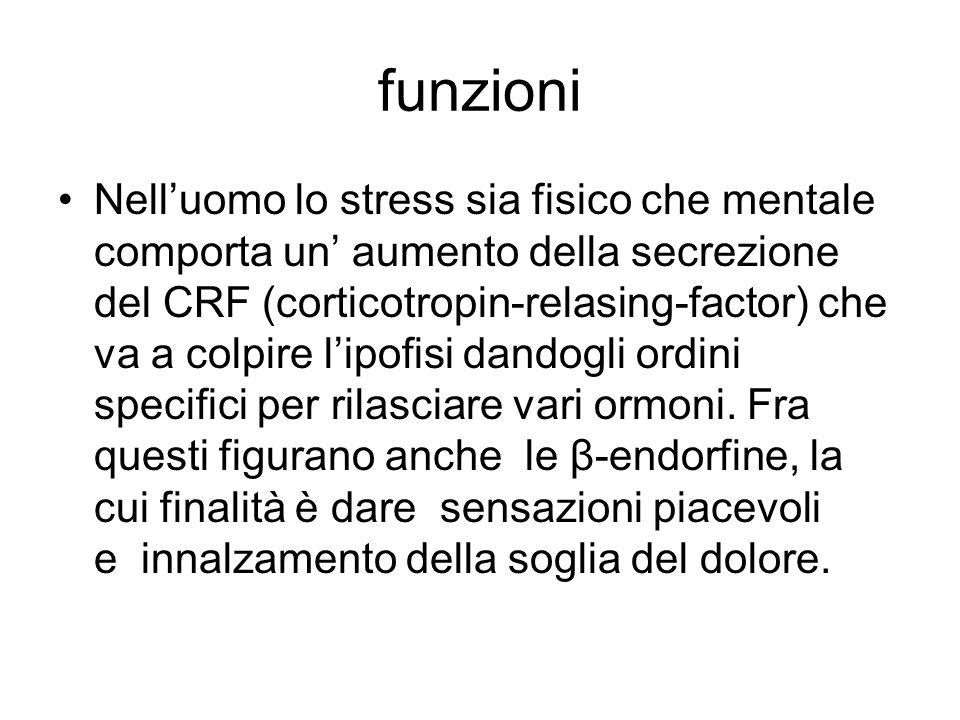 funzioni Nell'uomo lo stress sia fisico che mentale comporta un' aumento della secrezione del CRF (corticotropin-relasing-factor) che va a colpire l'i