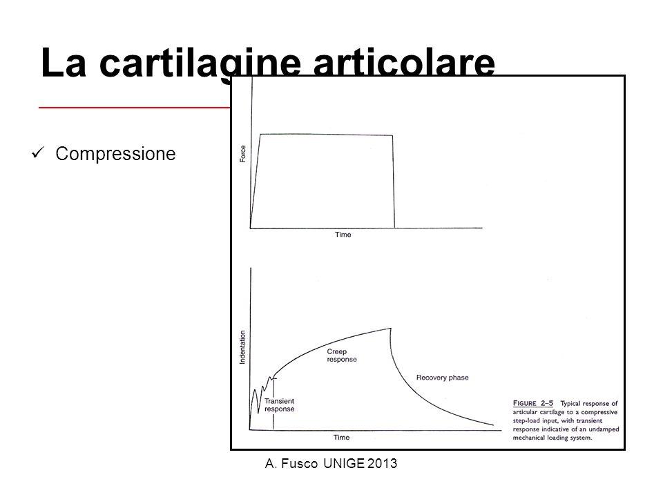 A. Fusco UNIGE 2013 La cartilagine articolare Compressione